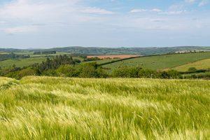 paysage de champs verts